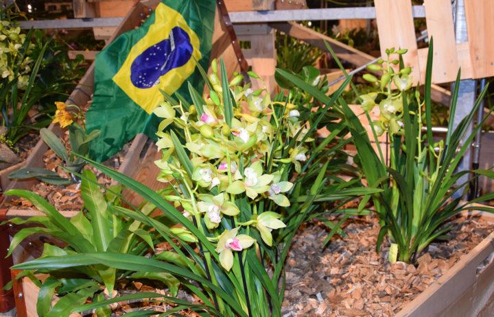 Orchideenausstellung 2020_Blumen
