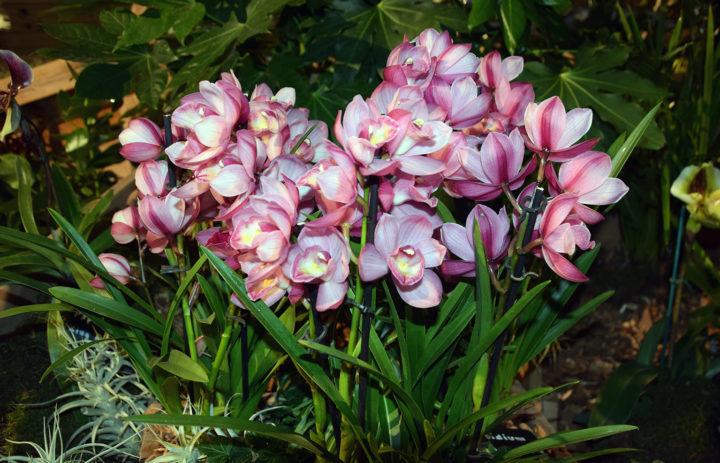Orchideenausstellung 2020_Blumen_2