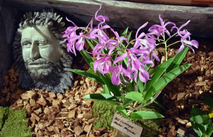 Orchideenausstellung 2020_Blumen_3