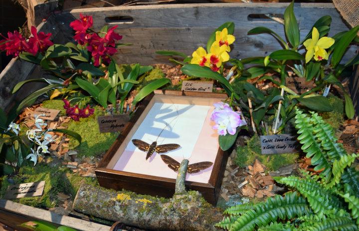Orchideenausstellung 2020_Blumen_4