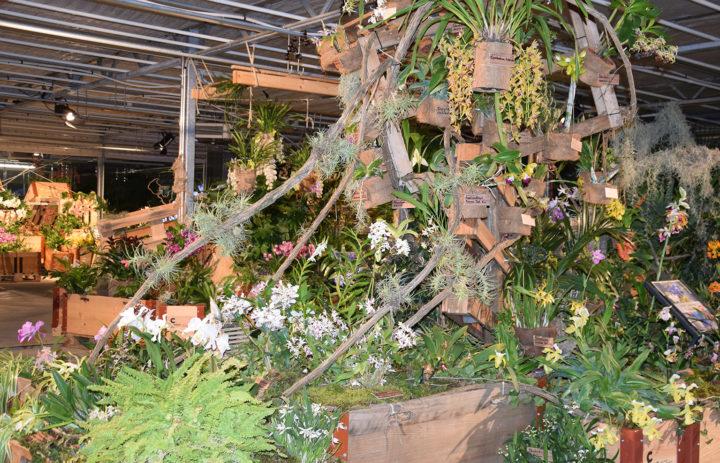 Orchideenausstellung 2020_Blumen_6